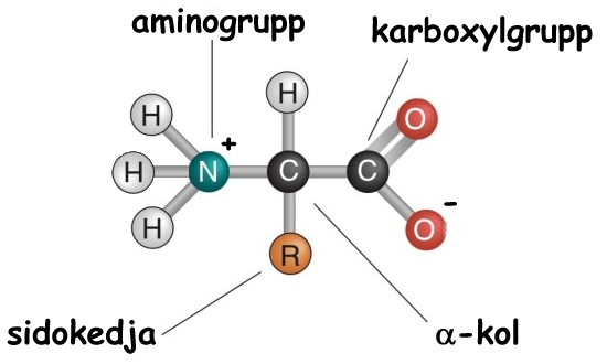 aromatiska aminosyror